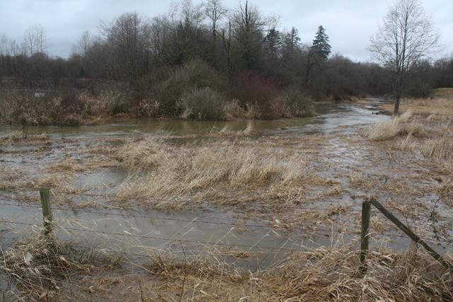 Salmon River uplands (272nd St.), Jan. 14, 2014