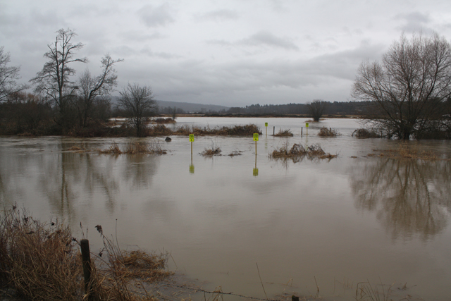 Fort Langley floodplain (from Glover), Jan. 11, 2014