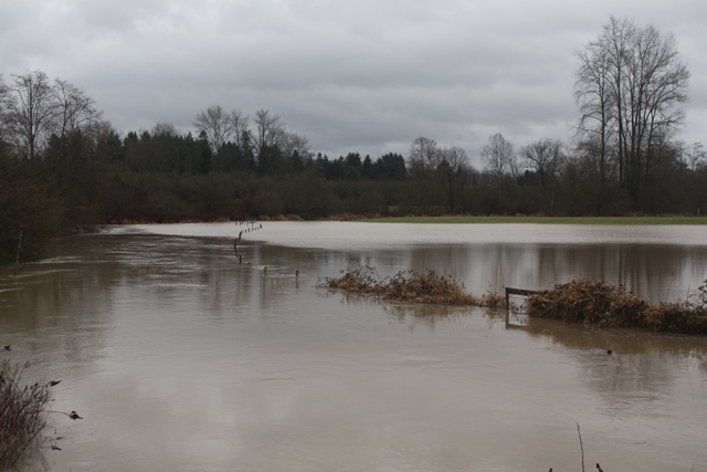 Fort Langley floodplain (from Glover), Jan. 11, 2014