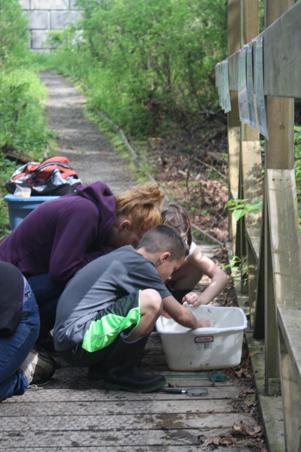 Identifying invertebrates